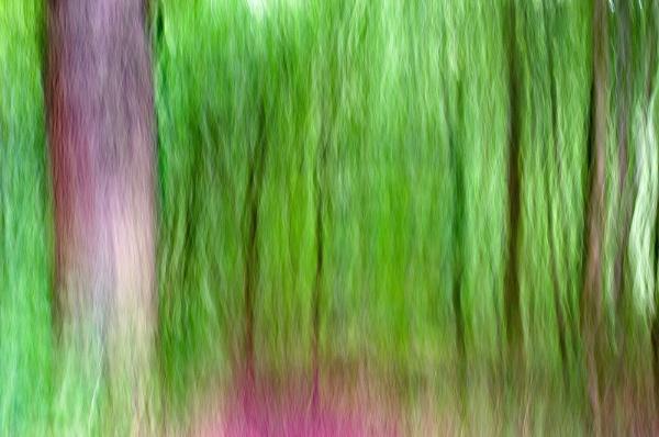 Purple Patch by AllistairK