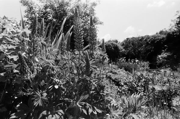 garden by retroman