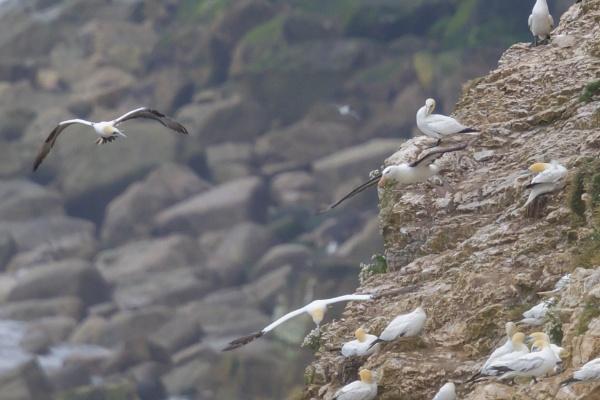 Albatross by nobby1