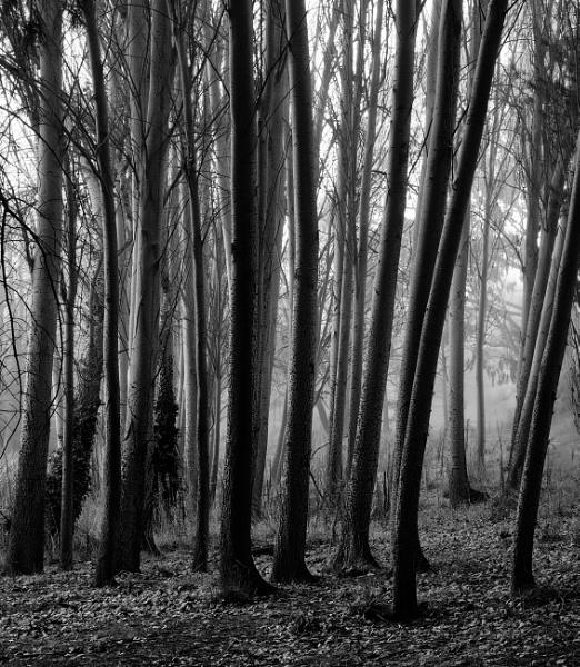 A Grove in Winter, Canberra by BobinAus
