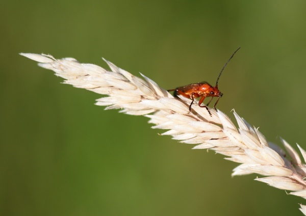 insect by Philipwatson