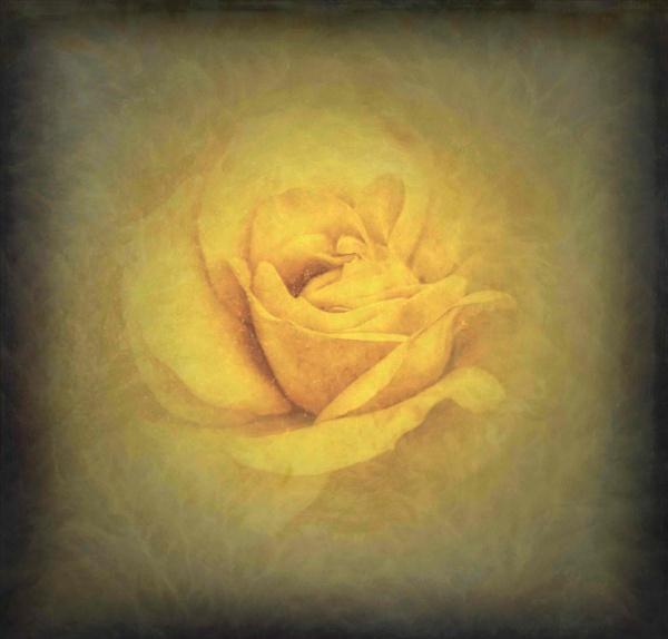 Floral Sunshine by adagio