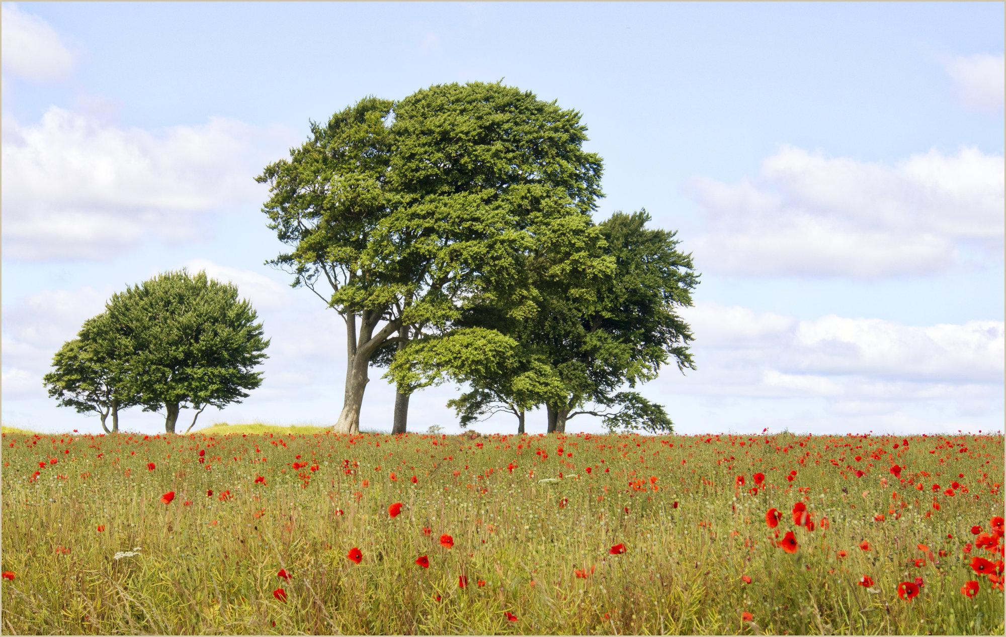 SUMMER TREES !