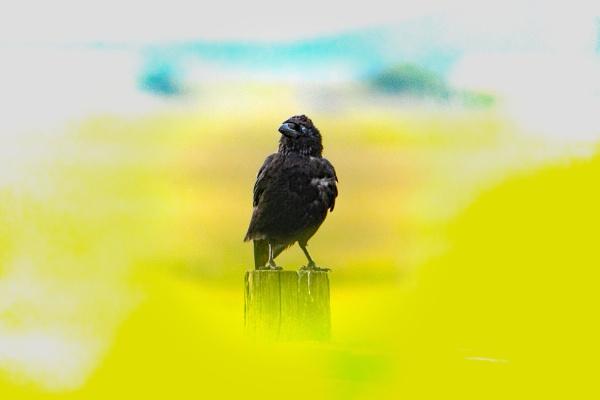 Crow In Vegetation by terra