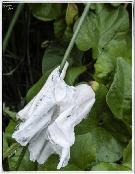 Botanical Bounty by LynneJoyce