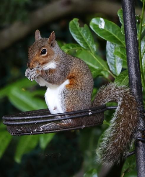 Mr Squirrel! by Jat_Riski