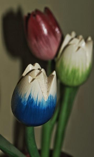 Tulips by Merlin_k