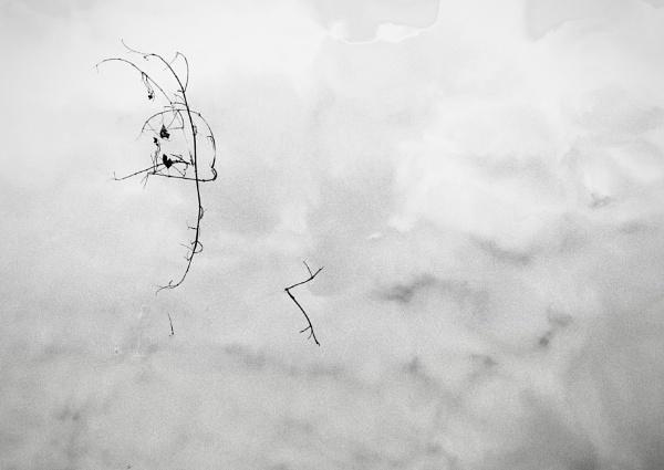 Twiggy by nclark