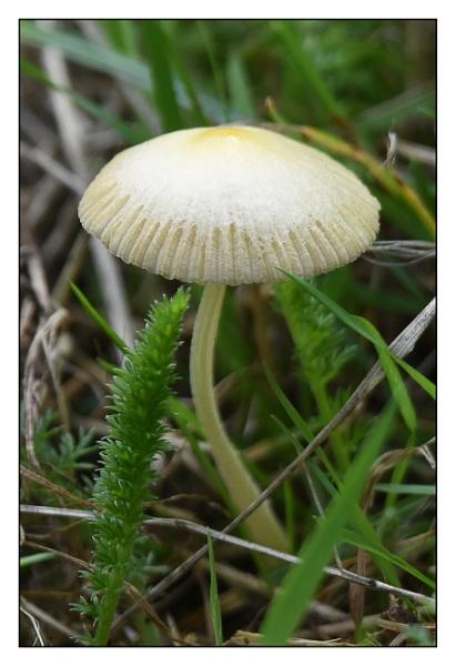 tiny fungi by alant2