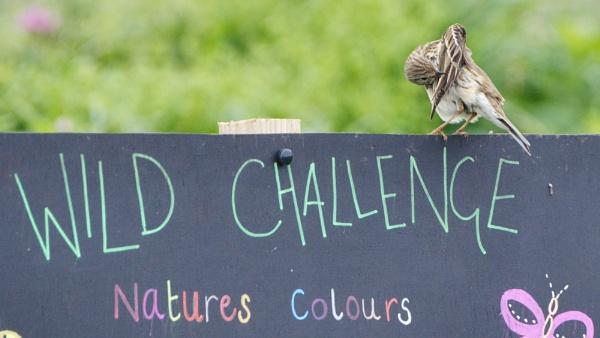 Wild Challenge by Alan_Baseley
