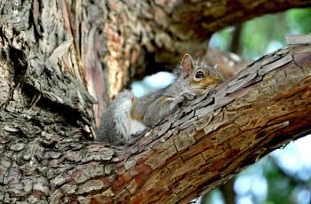 The secret life of squirrels...