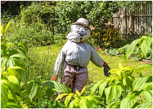 Monsieur Scarecrow by mac