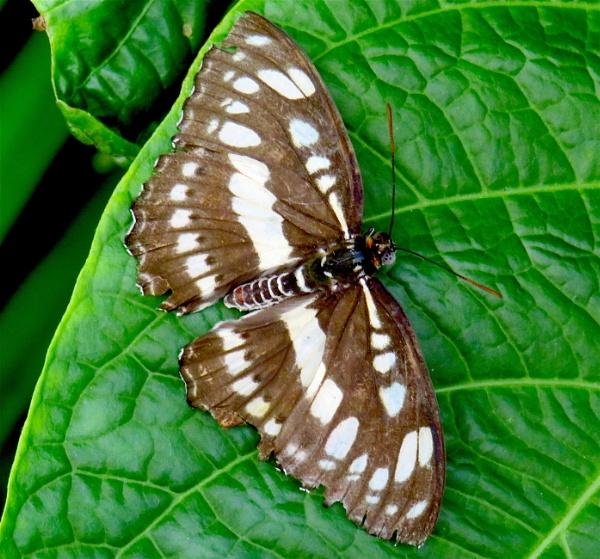 Another Butterfly by ddolfelin