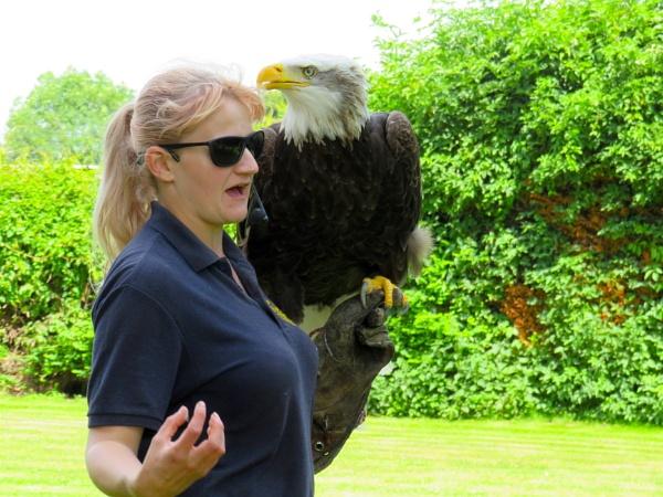 Sea Eagle and friend by ddolfelin
