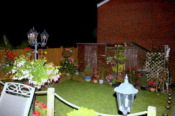 garden at night by arnieg