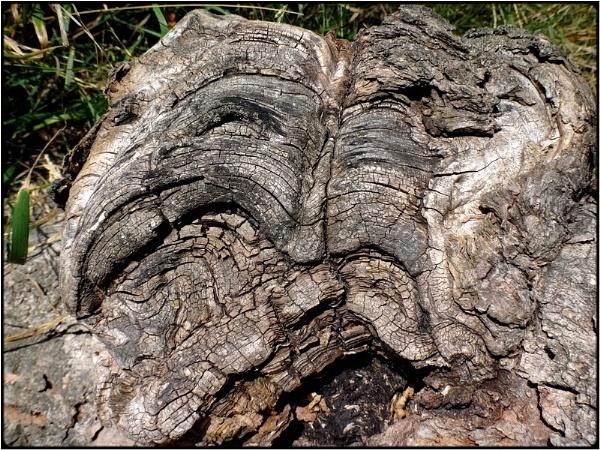 the grim root by FabioKeiner