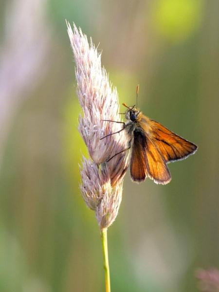 Butterfly by DerekHollis