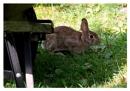 Bunny in a Shadow
