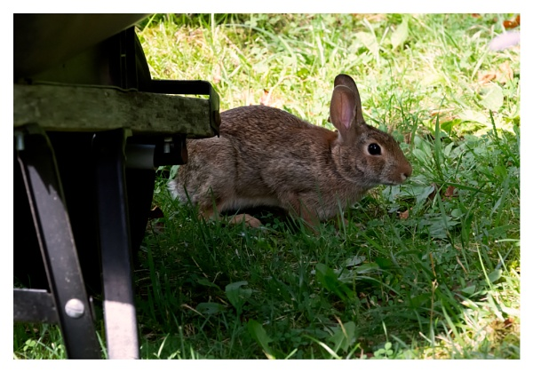 Bunny in a Shadow by taggart