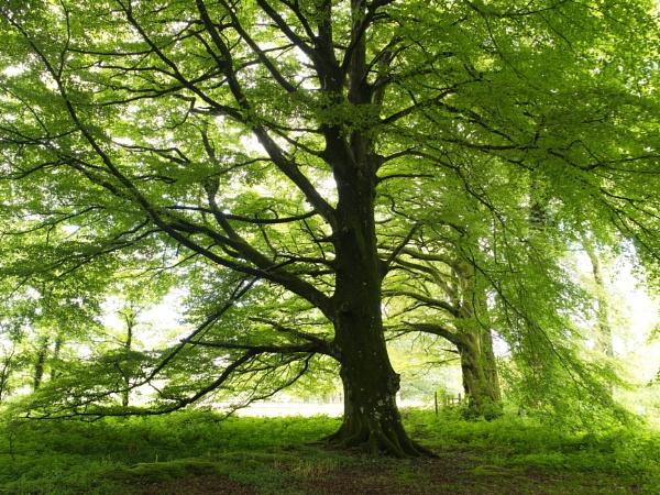 woodland light by alfpics