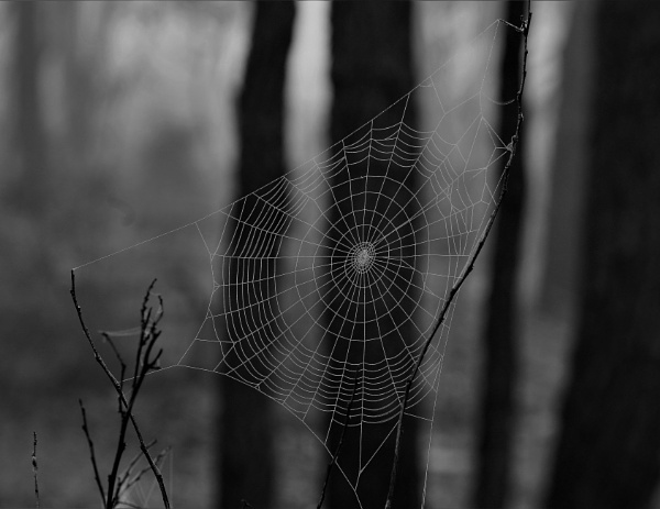 ""\""""Winters Web"""" by dales""600|463|?|en|2|dff5129d91dabed77554af3a52944f5a|False|UNLIKELY|0.3126142919063568