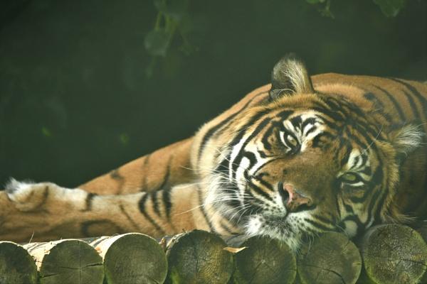 cat reclining by Igcw9170