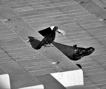 *** Curious Pigeon ***