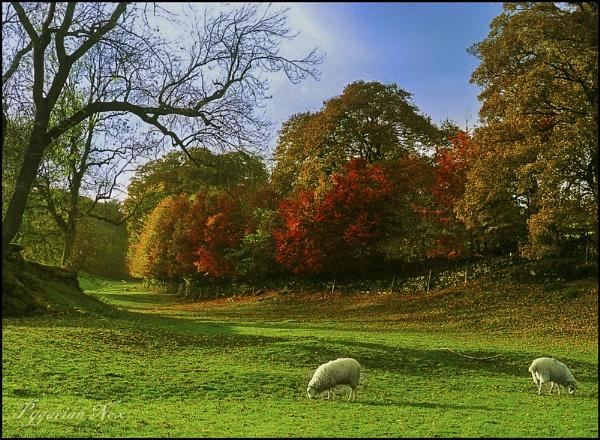 Autumn Colours by Pygar