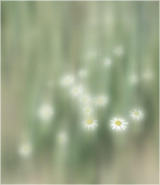 Daisies by MAK2