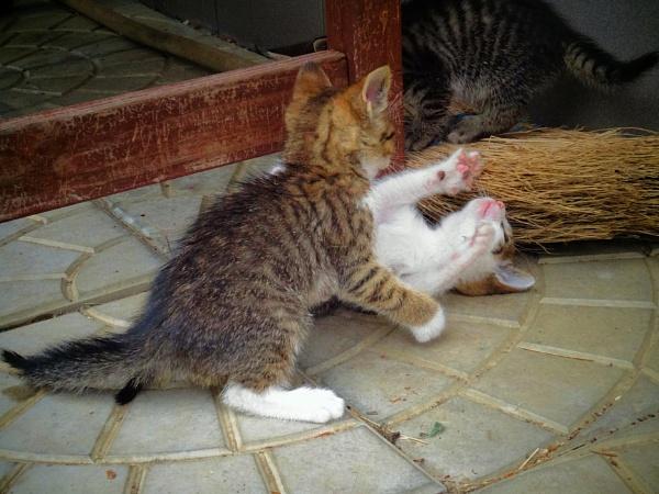 little cats by elousteve