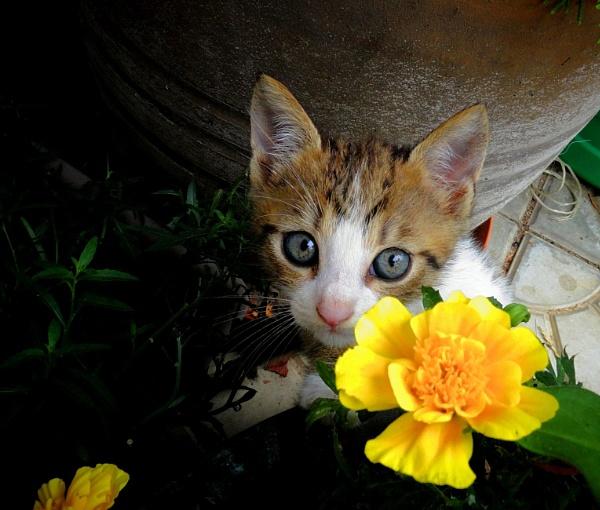 Kitty cat and flower by elousteve