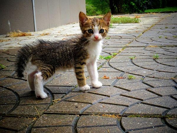 Kitty cat 2 by elousteve