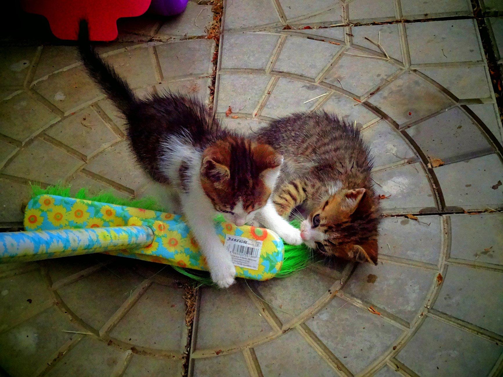 Kitty cats and circles around.