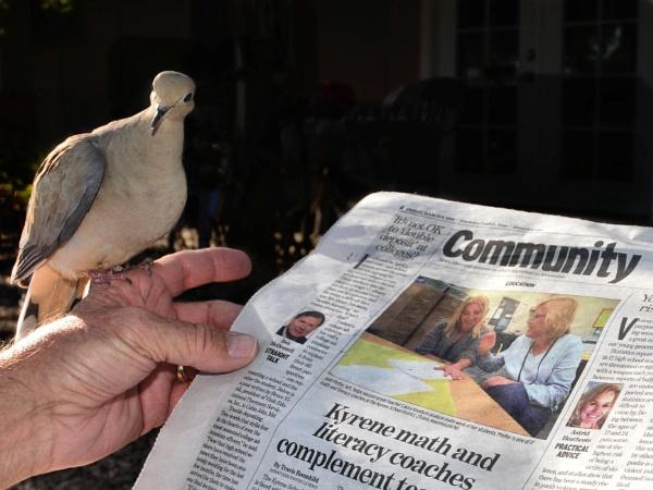 Bird News by Gbloniarz