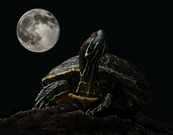 Moonlighting by Gbloniarz
