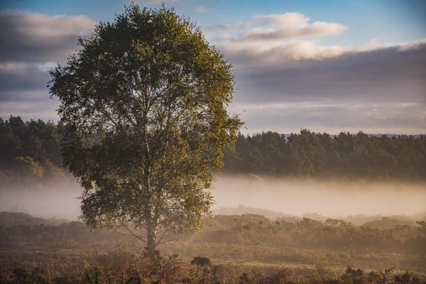 Dawn by JohnDyer