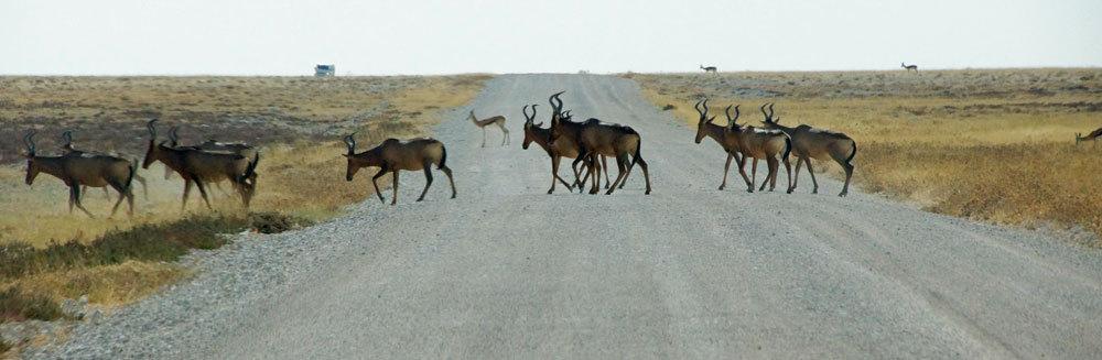 Kudu - Etosah NP