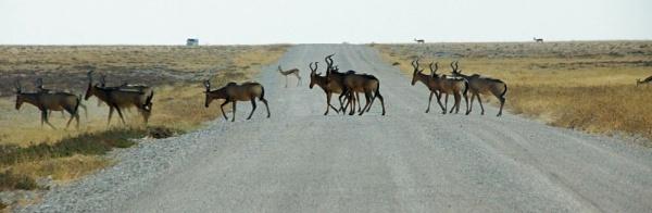 Kudu - Etosah NP by jinstone