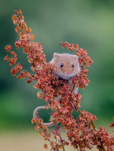 Peek a boo by phil_j