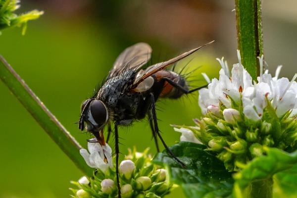 Hairy Fly Guy by terra