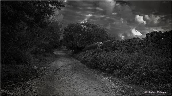 Ahead ... Black or White ? by Herbert_Catania