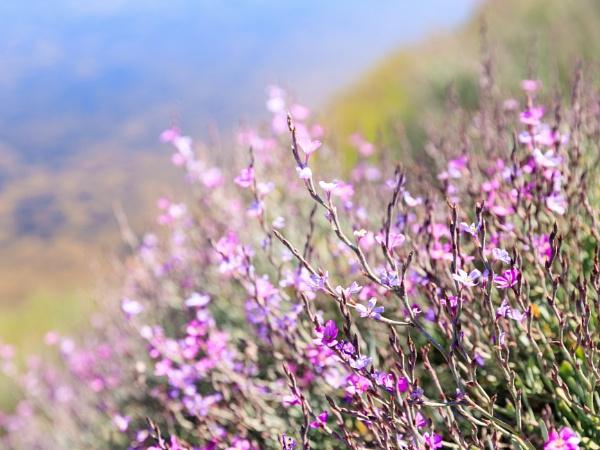 Mursh flowers by Neopolis
