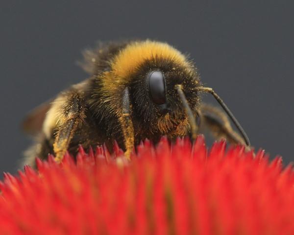 Collecting Pollen by jonnydart