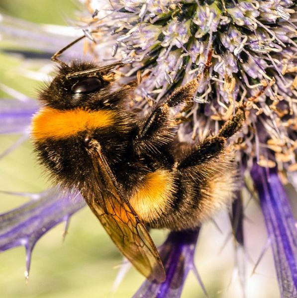 Bee by delboy85