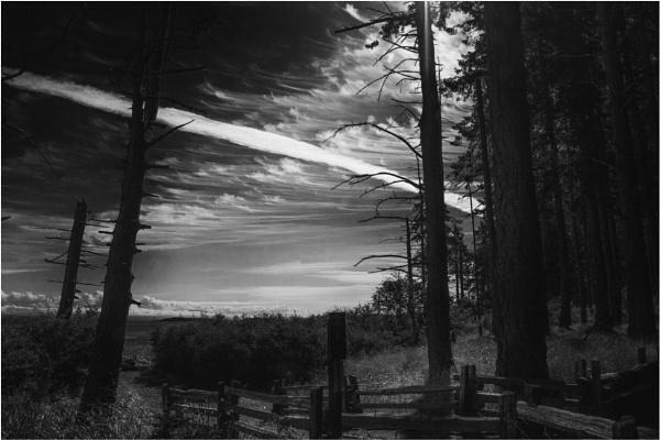 Strange Sky by Daisymaye