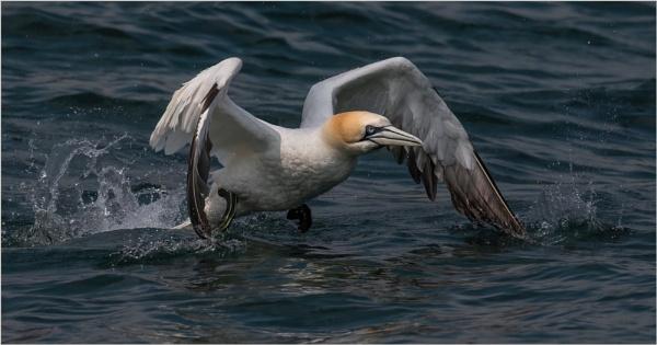 Taking flight by mjparmy