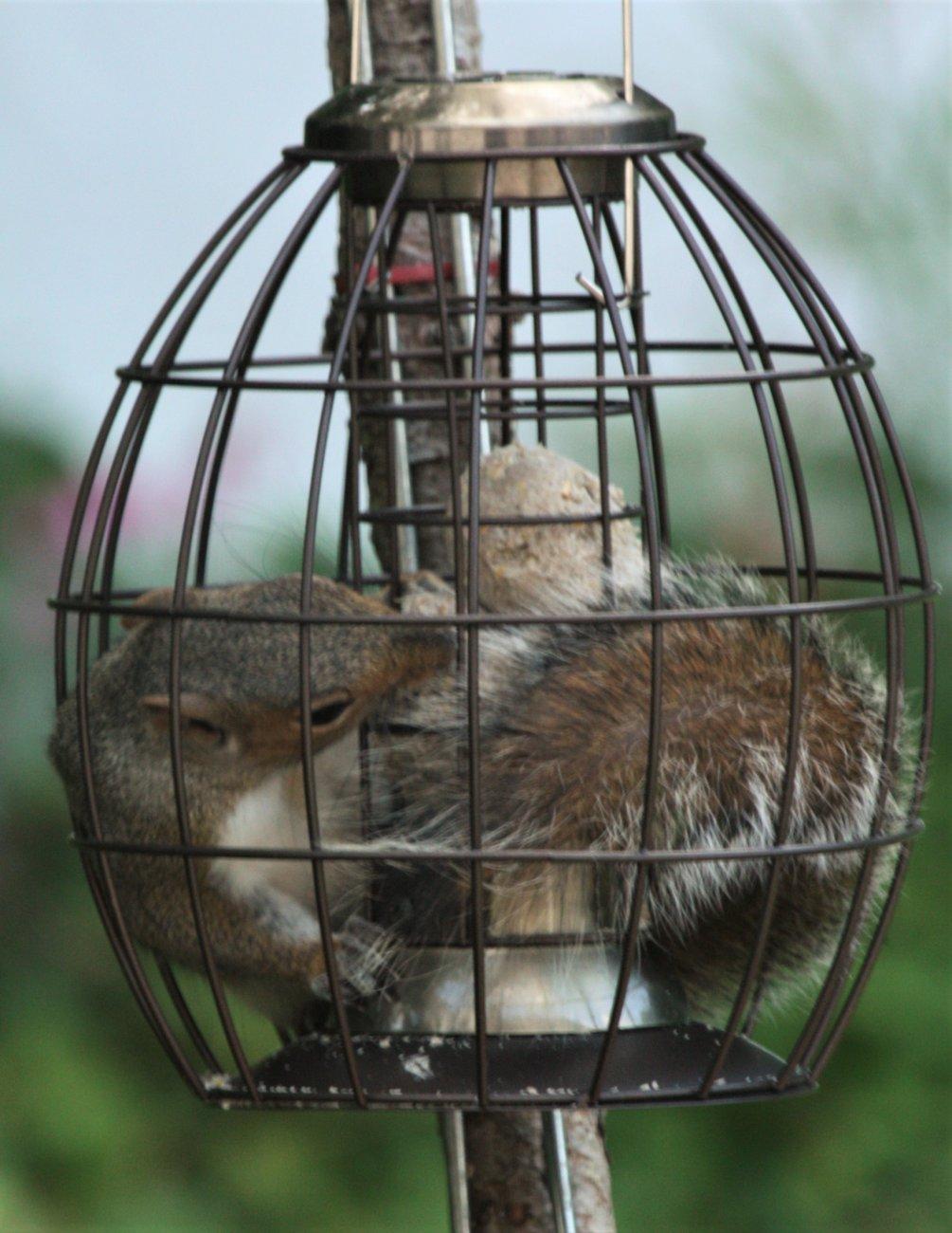 Squirrel proof feeder?