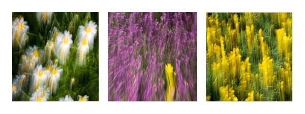 ICM triptych by happysnapper