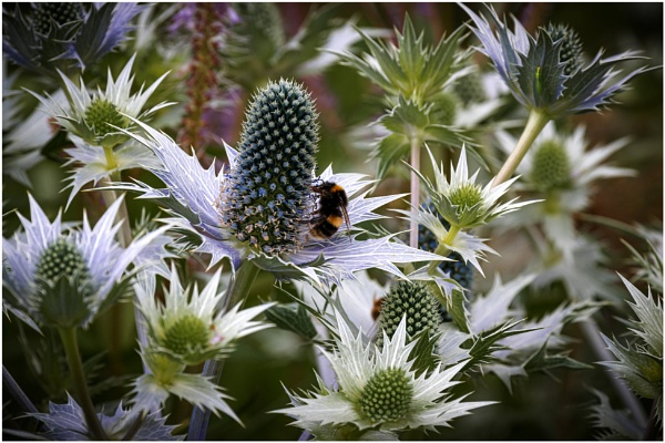 A Prickly Subject. by capto