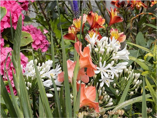 In The Garden by capto